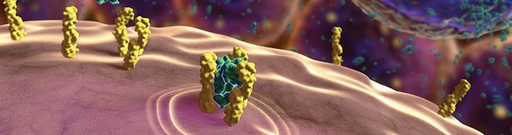 Obrazek posiada pusty atrybut alt; plik o nazwie CST-Covid-19-Cytokines-2.png